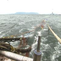 香川県-A・025-かがわ漁業塾-s03